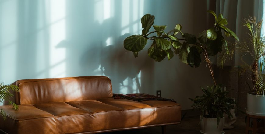 brown leather couch beside green potted plant